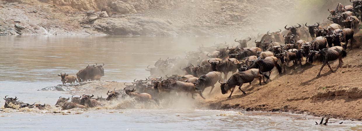 Large-Wildebeest-Migration-Serengeti