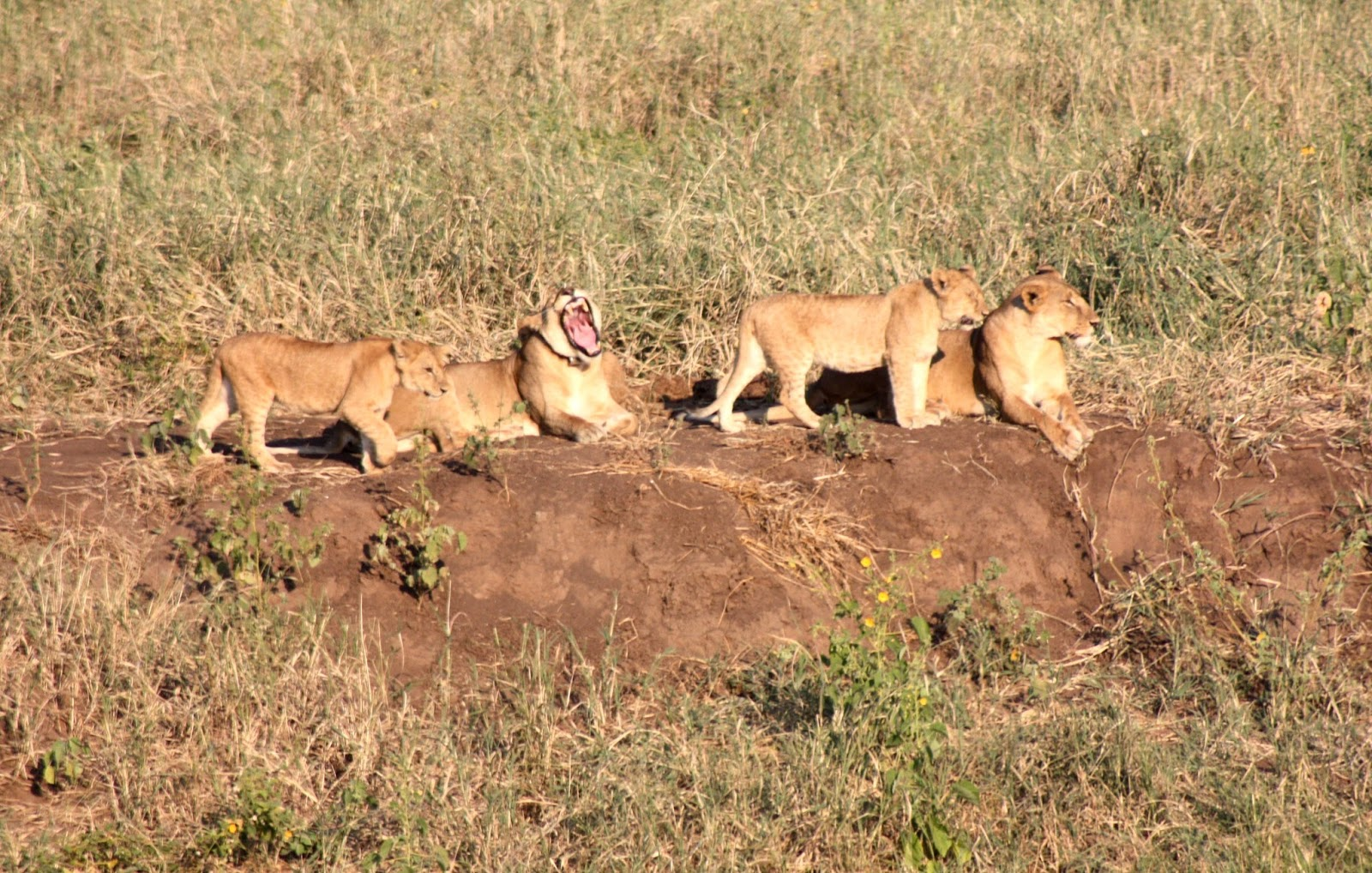 Southern Circuit Safaris
