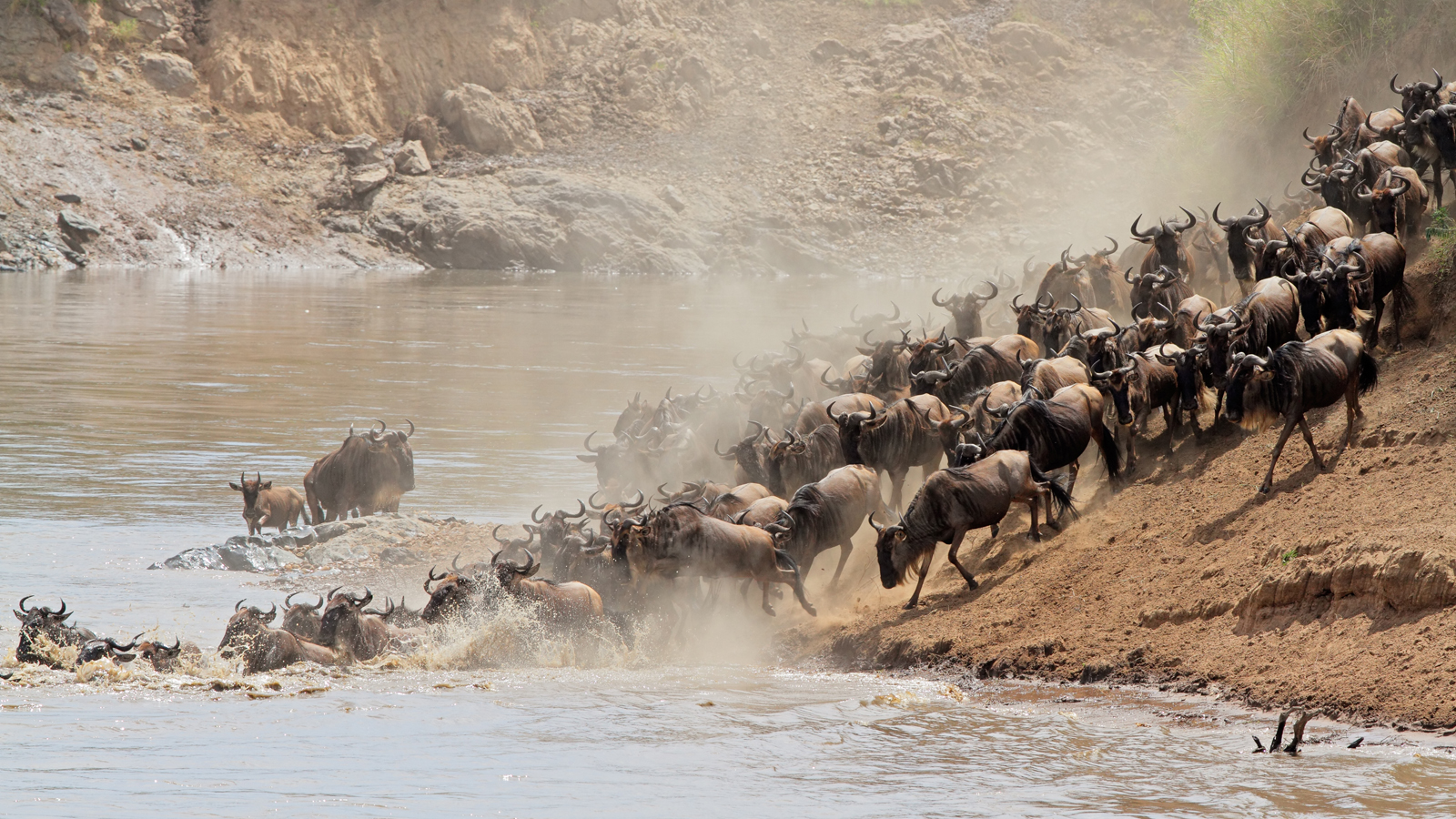 Breathtaking Images of the Great Wildebeest Migration | TakePart