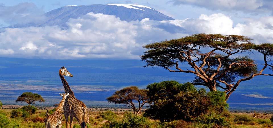 mt.-kilimanajro-trekking-1