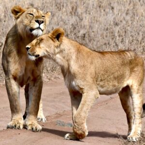 4 Days 3 Night Safari