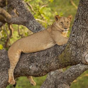 2 Days Safari to Ngorongoro and Manyara National Parks