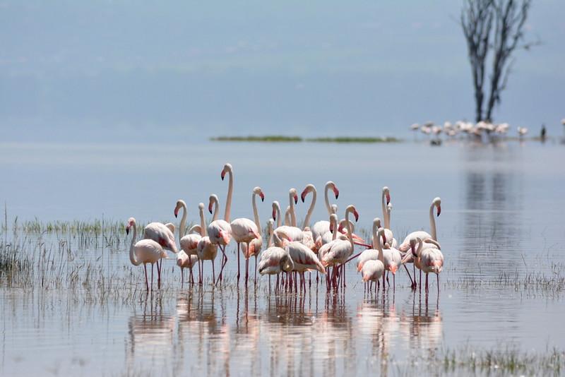 10 Days Safari to Masai Mara and Lake Nakuru