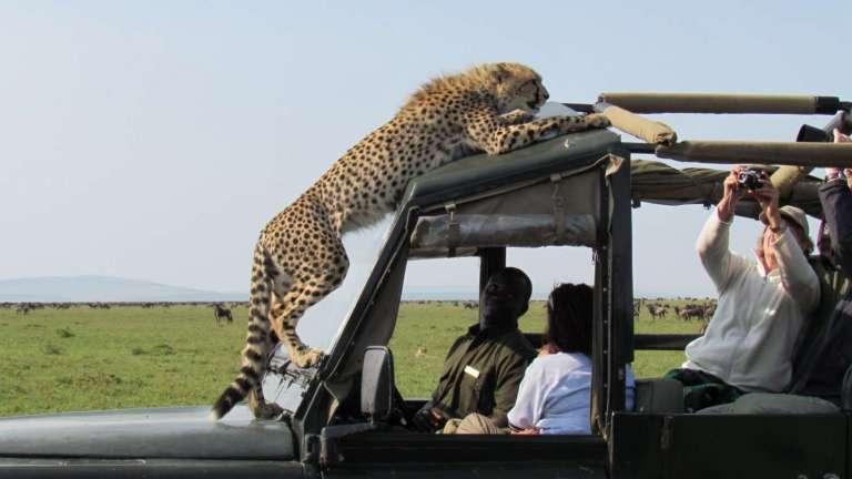 safari 1 1 768x432 1
