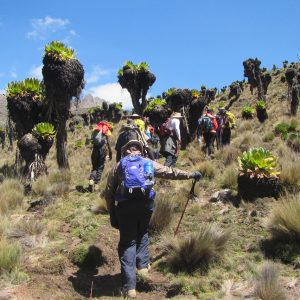 4 Days Mount Kenya Climbing