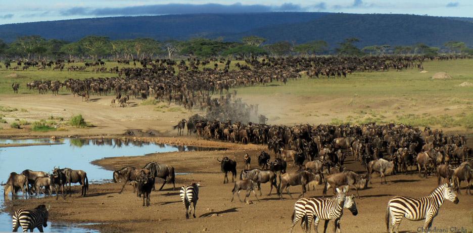 ndutu safari lodge wild wonders