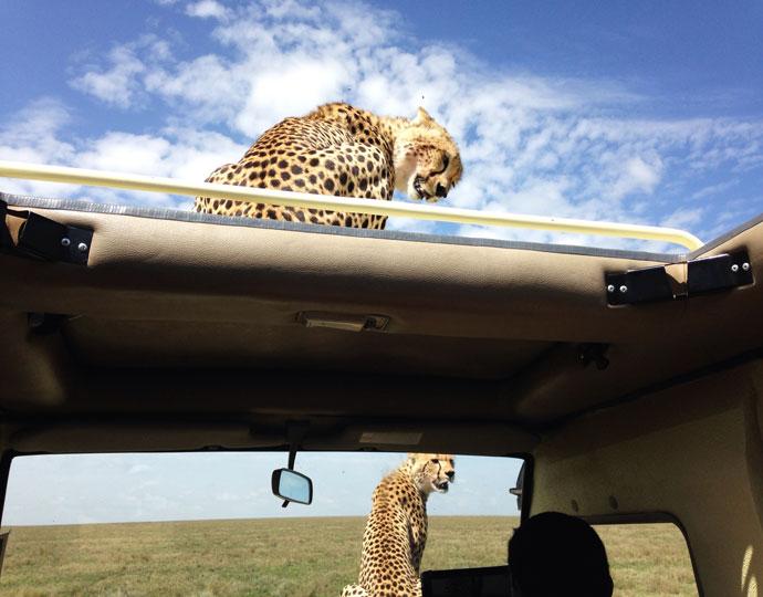 tanzania safaris cheetah 1