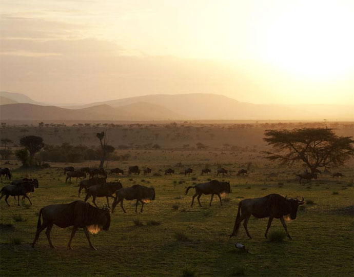 tanzania safaris migration