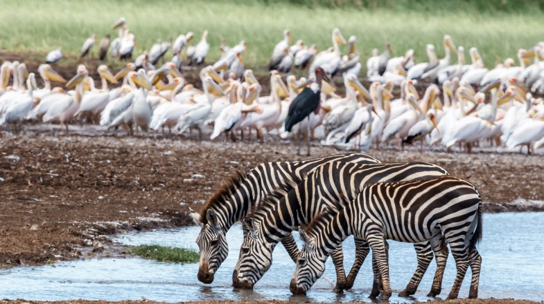 top things to do at lake manyara national park 1515995544 785X440