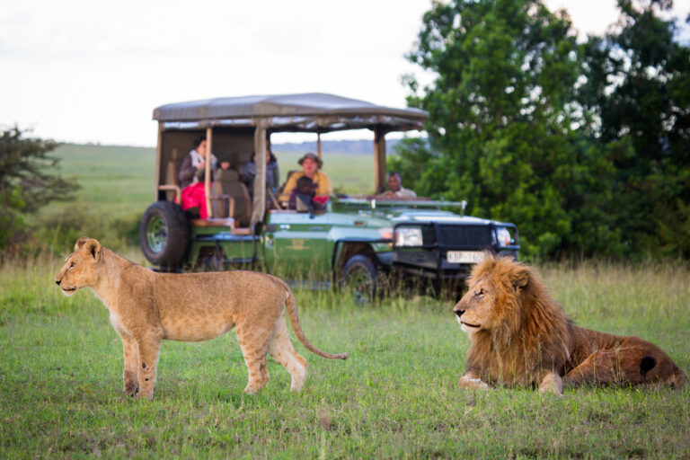 Authentic safari camping in Amboseli and the Masai Mara